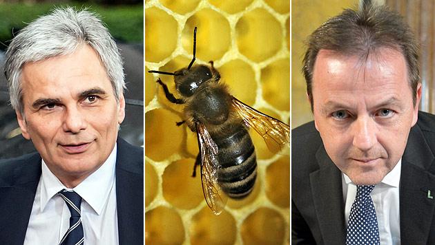 Bienen retten, aber wie? SPÖ maßregelt Berlakovich scharf (Bild: AP, dpa/Fredrik von Erichsen, APA/Roland Schlager)