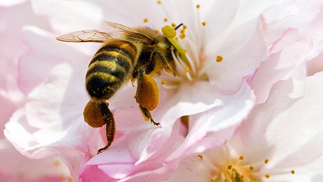 """Forscher: Pestizide """"fatal für die ganze Insektenwelt"""" (Bild: AP)"""