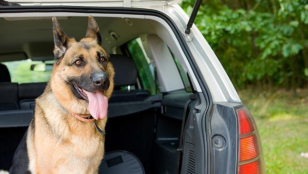 So kommen sich Hund und Auto entspannt näher (Bild: thinkstockphotos.de (Symbolbild))