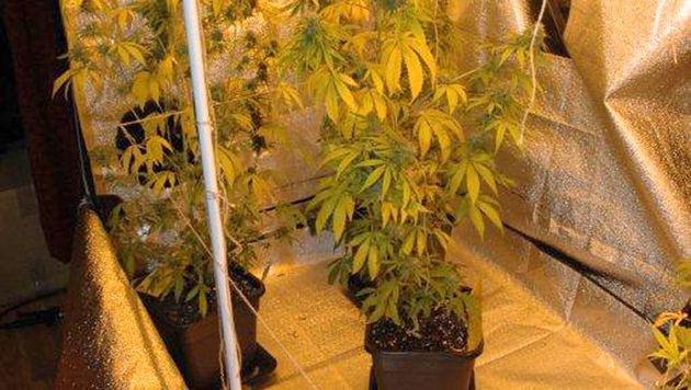 Drogenhandel in OÖ aufgeflogen: 149 Anzeigen (Bild: APA/POLIZEI)