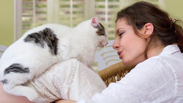 So kurieren Sie Ihre Katze von Trennungsängsten (Bild: thinkstockphotos.de)
