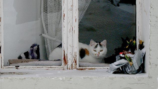 Fenster: Gefahr Nummer eins für Wohnungskatzen (Bild: Christoph Gantner)