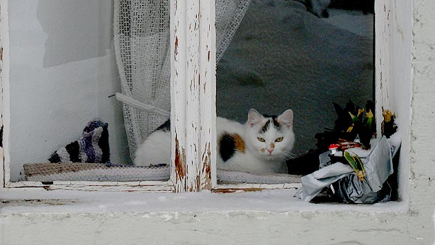 OÖ: Vermieter will Freilauf-Verbot für Katzen (Bild: Christoph Gantner)