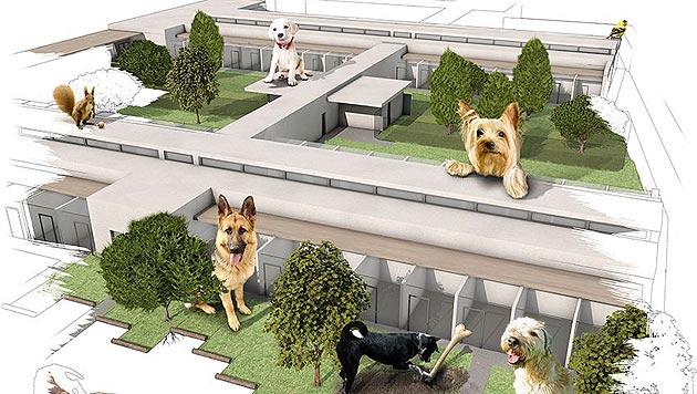 """Ihre eigene Spendenaktion für das """"TierQuarTier"""" (Bild: TierQuarTier Wien/Tierschutzstiftung)"""