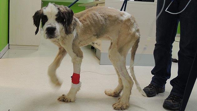 D: Verwahrloste Hunde lebten neben Tierkadavern (Bild: Tierrettung Rhein-Neckar)