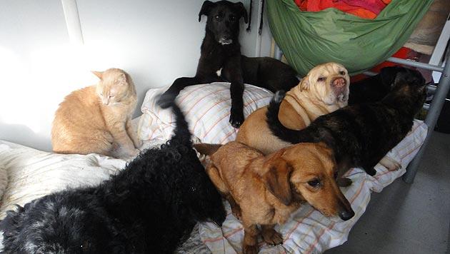 Tierheim in Ungarn benötigt dringend einen Zaun (Bild: Tierschutzverein Bubastis)