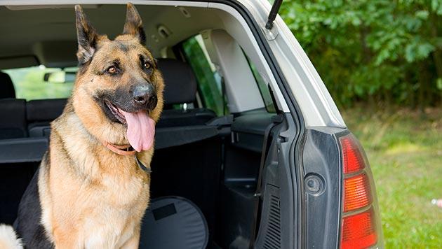 """Haustier im Gepäck: Reisen mit """"Bello"""" & Co. (Bild: thinkstockphotos.de)"""