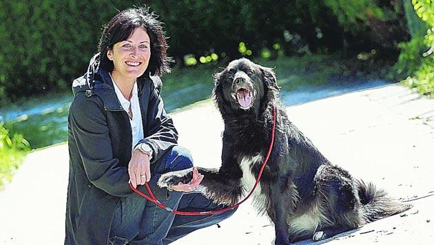 Tierheim-Kritiker dürfen nicht mit Hunden spazieren (Bild: Markus Tschepp)