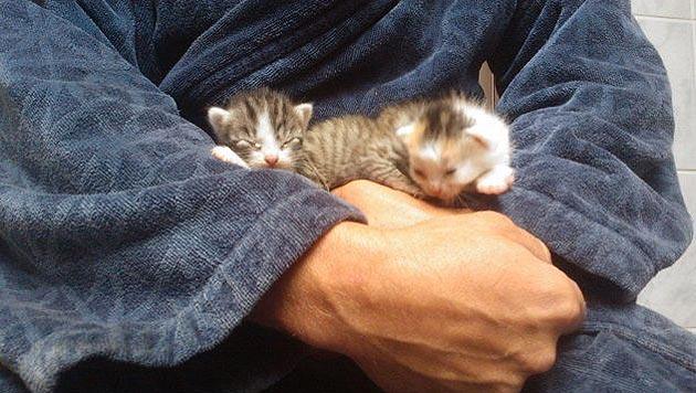 Winzige Kätzchen in Sack auf Parkplatz ausgesetzt (Bild: Pfotenhilfe Lochen)