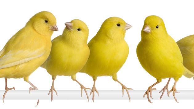 Für jeden Menschen gibt es den passenden Vogel (Bild: thinkstockphotos.de)