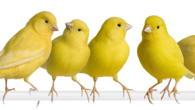 So verreisen Vogelhalter sorgenfrei (Bild: thinkstockphotos.de)