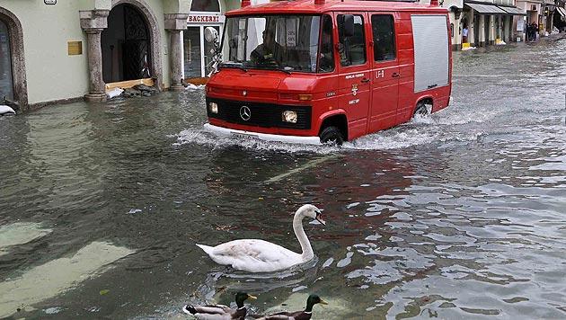 Unzählige Tiere vom Hochwasser bedroht (Bild: Helmut Klein)