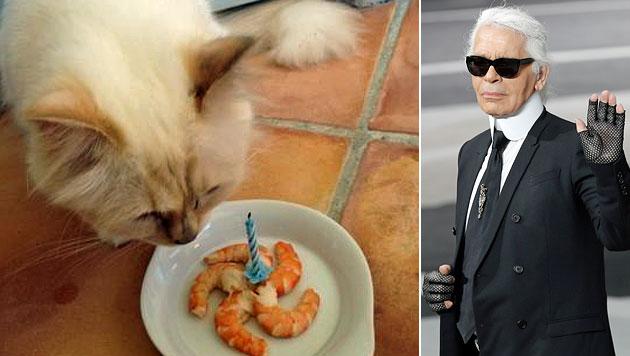 Karl Lagerfeld würde gern seine Katze heiraten (Bild: Twitter, AP)