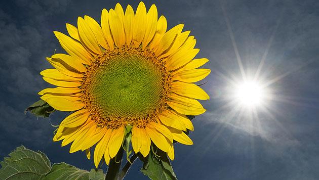 Wetter bleibt wechselhaft: Sonne, Regen, Gewitter (Bild: dpa/Patrick Pleul)