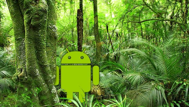 Android-Handys wachen über Urwald in Indonesien (Bild: Google, thinkstockphotos.de, krone.at-Grafik)