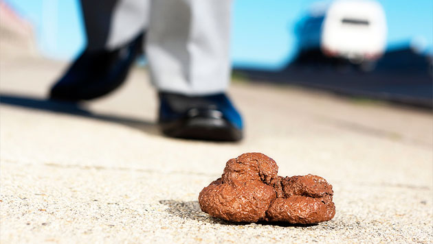 NÖ: Gesetzesänderung im Kampf gegen den Hundekot (Bild: thinkstockphotos.de)
