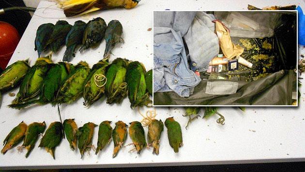 Bei Tierschmuggel Vogelgrippe-Virus eingeschleppt (Bild: BMF)