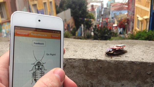 Bausatz lässt User Kakerlaken mit dem Handy steuern (Bild: Backyard Brains)