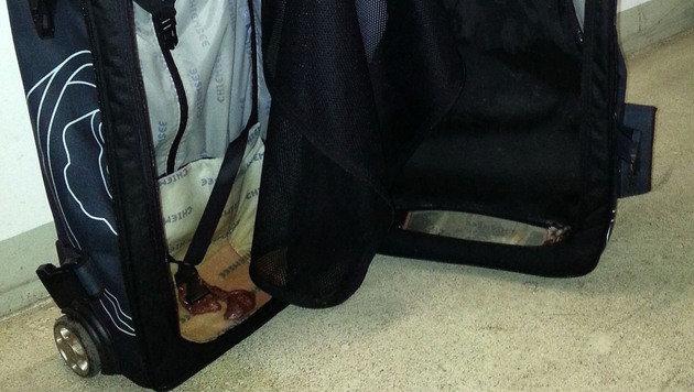 W: Hochträchtige Katze in Koffer gezwängt (Bild: APA/WIENER TIERSCHUTZVEREIN)