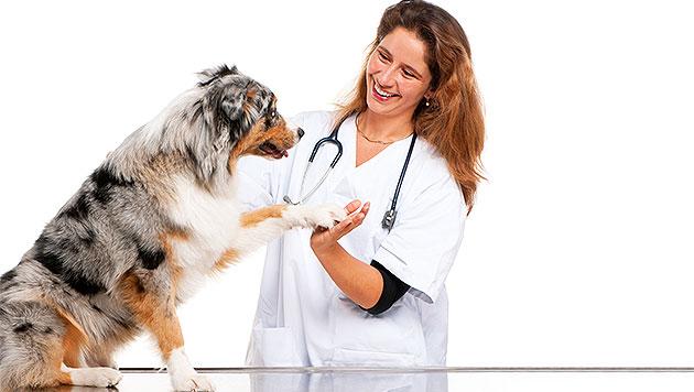 Haustiere jetzt impfen lassen und damit Gutes tun! (Bild: thinkstockphotos.de (Symbolbild))