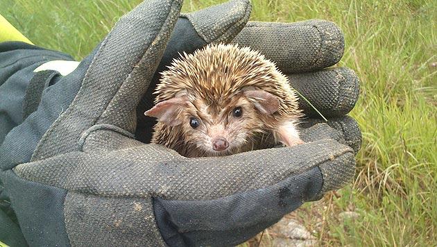 "Hunderte Kleintiere aus dem ""Tiko"" abgeholt (Bild: Claudia Terk)"