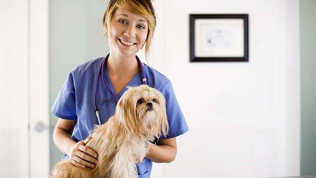 Viele Wege führen im Notfall zum Tierarzt (Bild: thinkstockphotos.de)