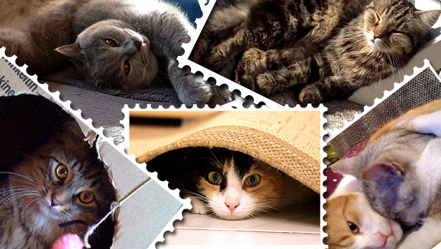 """Die """"Krone"""" und die Post suchen die besten Katzenfotos (Bild: privat, krone.at-Grafik)"""