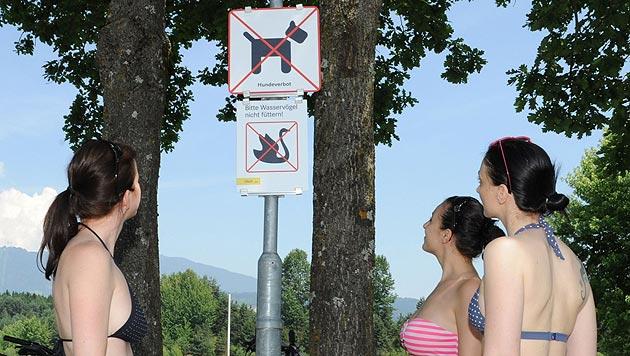 Hundeverbot an vielen Badeseen in Österreich (Bild: Stadt Villach/Zore)