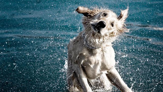 So steht dem Badespaß mit Hund nichts im Weg (Bild: thinkstockphotos.de)