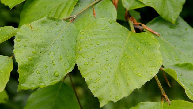 Nach sonnigem Wochenstart folgt Regen (Bild: dpa/Franziska Kraufmann)