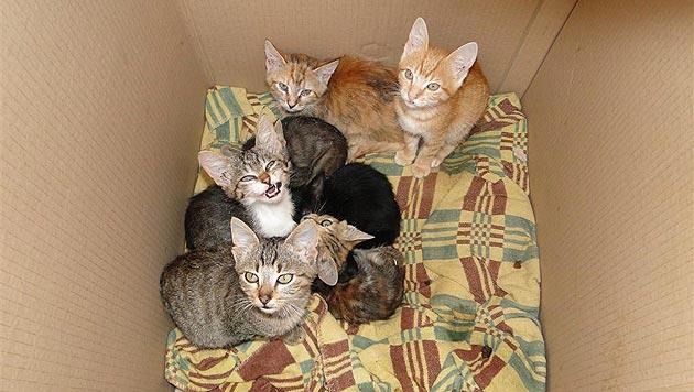 Katzenbabys in Müll geworfen, Tiere verstümmelt! (Bild: Purzel & Vicky)