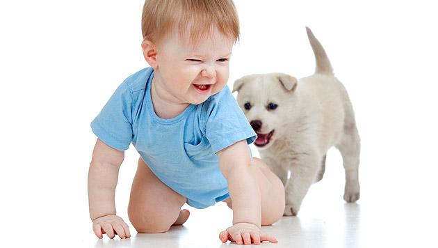 Gesund mit Hund: Babys profitieren von Tierkontakt (Bild: thinkstockphotos.de)