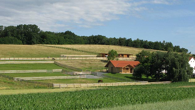 Pferdehof bietet Schutz für Vierbeiner in Not (Bild: Tierhilfe Horsearound)