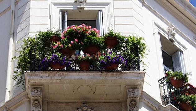 So sind Ihre Pflanzen im Urlaub gut versorgt (Bild: thinkstockphotos.de)