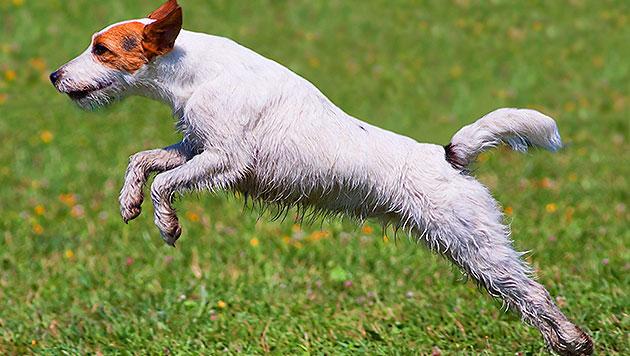 Mann tötete eigenen Hund durch Schlag ins Genick (Bild: thinkstockphotos.de (Symbolbild))