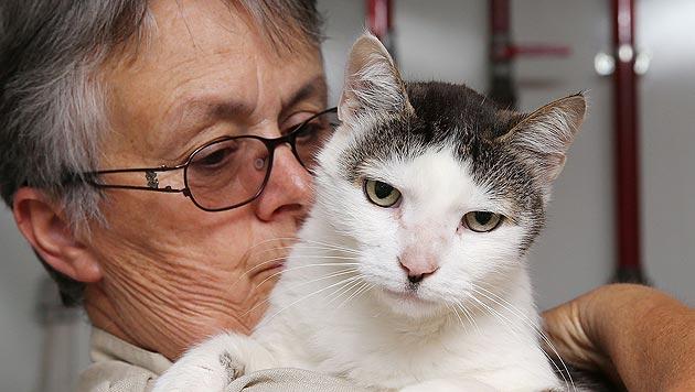 Erneut Tierquälerei an Katzen in der Steiermark (Bild: Jürgen Radspieler)