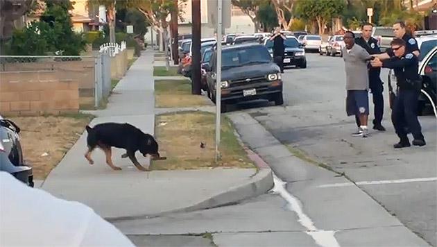 Skandal in USA: Rottweiler von Polizei erschossen (Bild: Screenshot YouTube)