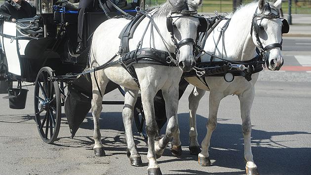 Salzburger Fiaker-Pferde bekamen Sonntag Hitzefrei (Bild: APA/HERBERT PFARRHOFER)