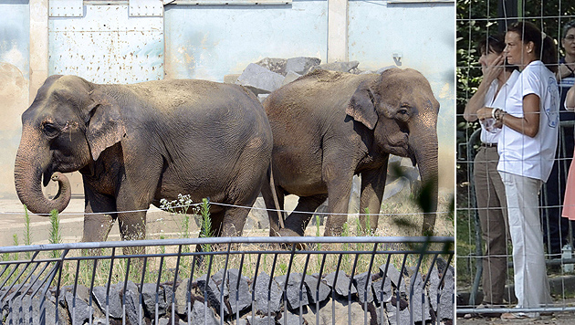 Stephanie von Monaco rettet zwei Elefanten das Leben (Bild: AFP)