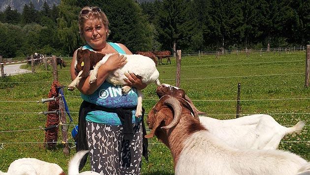Vernachlässigte Ziegen in Tirol starben qualvoll (Bild: Andreas Moser)