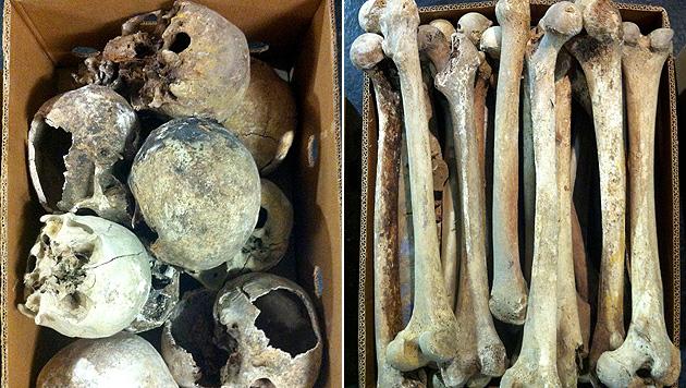 Bgld: Geldstrafe für 48-jährigen Knochenjäger (Bild: APA/KATHRIN SPALTL)