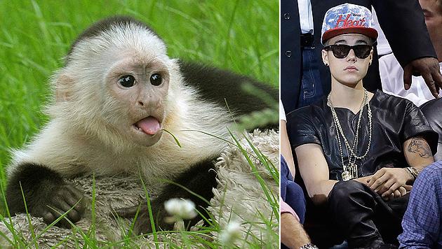 Affen-Pflege nicht bezahlt: Nun droht Bieber die Pfändung (Bild: dpa/Holger Hollemann, AP)