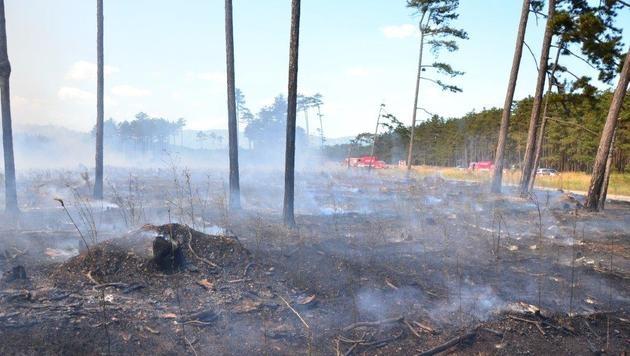 400 Feuerwehrleute kämpften gegen Waldbrand in NÖ (Bild: APA/EINSATZDOKU.AT/PATRIK LECHNER)