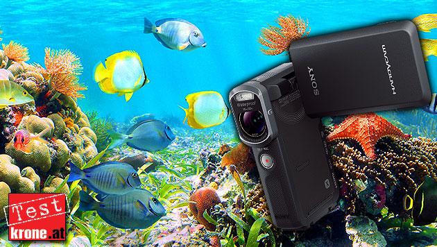 Auf Tauchstation mit Sonys wasserdichter Handycam (Bild: Sony, thinkstockphotos.de, krone.at-Grafik)