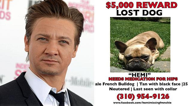 Renner: 5.000 $ Finderlohn für entlaufenen Hund (Bild: AP, Facebook)