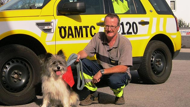 ÖAMTC-Pannenfahrer rettete ausgebüxte Hündin (Bild: ÖAMTC)