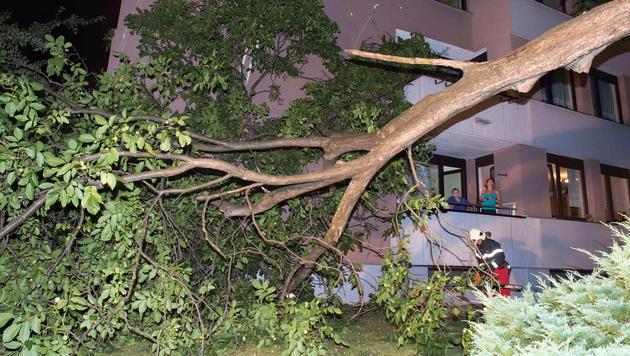 Unwetter wüten in OÖ - Baum stürzt auf Wohnhaus (Bild: APA/FOTO-KERSCHI.AT/WERNER KERSCHBAUMMAYR)