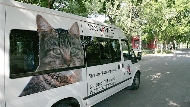 """""""Vier Pfoten""""-Streunerkatzenmobil wieder unterwegs (Bild: Vier Pfoten)"""
