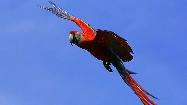Costa Rica kündigt Schließung öffentlicher Zoos an (Bild: EPA)