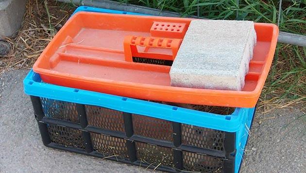 Kaninchen in Plastikbox vor Tierheim ausgesetzt (Bild: Tierheim Dechanthof)